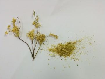 Meadow Sweet (Dried)
