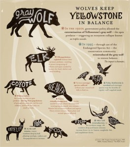 Wolves keep Yellowstone in balance